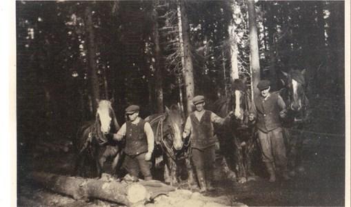 Skogsarbete 1940-talet Pelltorp