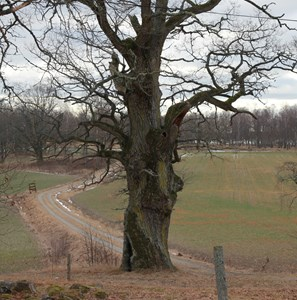 Vaktträd till Eckerstalägret